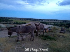 Burros on site at Circle View