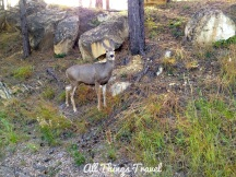 Deer at Devils Tower