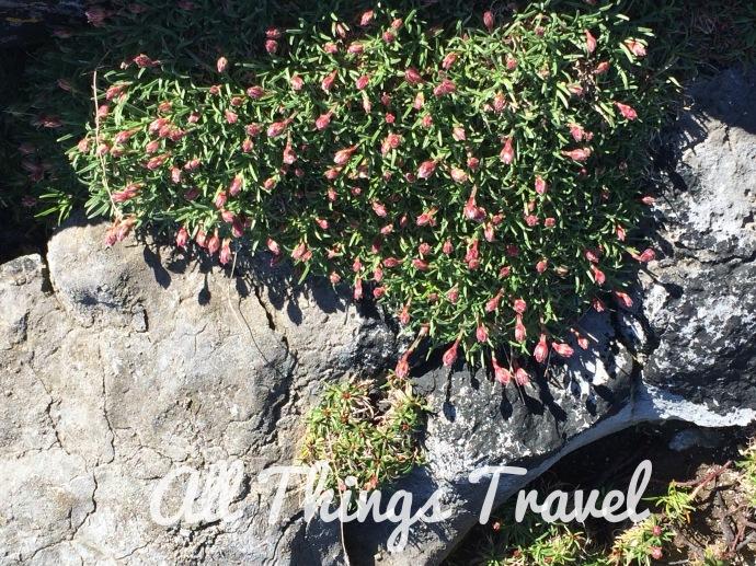 The Burren flora